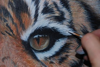 Applying the white fur using Acrylic paints on a Coloured pencil portrait of a male sumatran tiger