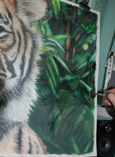 Applying water to the jungle background on a Coloured pencil portrait of a male sumatran tiger
