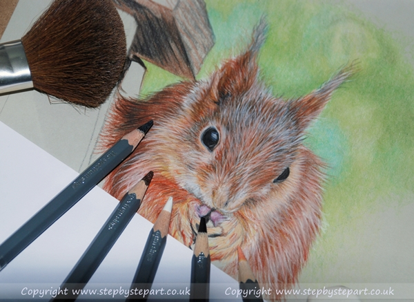 Red Squirrel Coloured pencil portrait using WH Smith colouring pencils