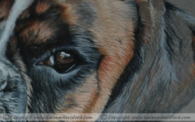 Male Brindle Boxer dog in Coloured pencils