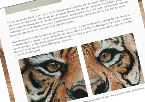 Sumatran Tiger created on Colourfix article page link