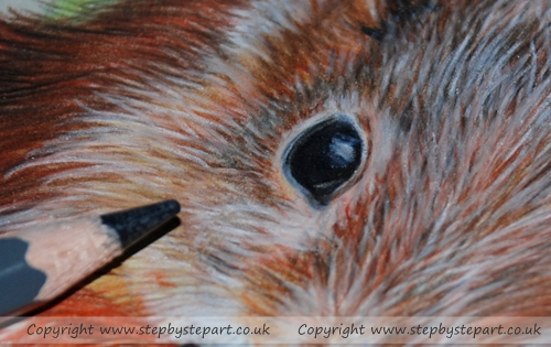 Close up image showing fine detail of a Coloured pencil Red Squirrel using WH Smith colouring pencils