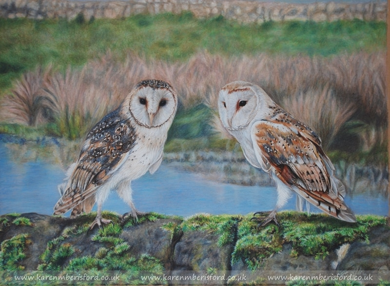 Pencil portrait of a Male and Female Barn Owls on a mossy wall in Northumberland