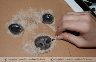 Cream Pomeranian pencil portrait progress 1