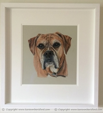 Red Boxer coloured pencil portrait framed in a white frame and mount