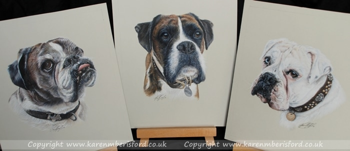 Boxer dogs in coloured pencils - white and 2 brindles