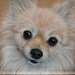 Cream Pomeranian Dog pet portrait in Coloured pencils