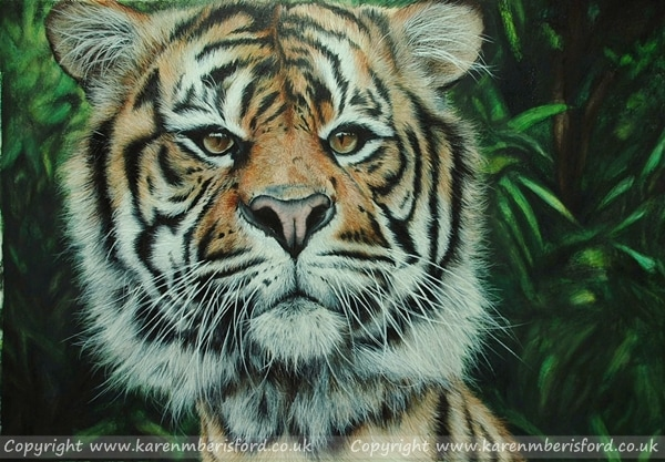 A male sumatran Tiger created in Coloured pencils on White Colourfix paper