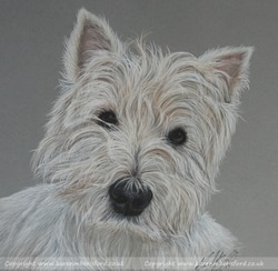 West Highland Terrier pet portrait completed in Coloured pencils by UK Artist Karen M Berisford