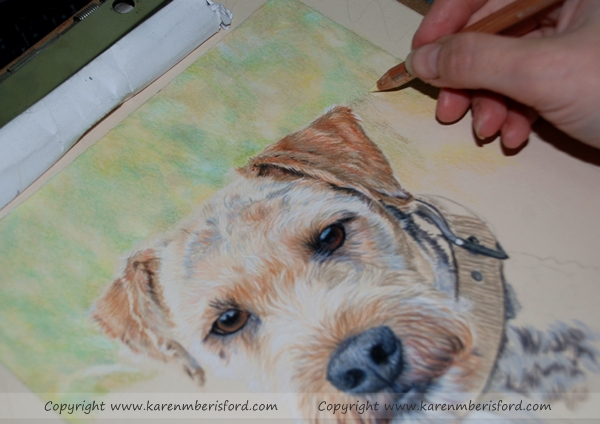 Creating a Coloured pencil portrait of a airedale/paterdale dog