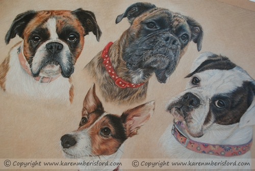 Close up of a Brindle Boxer, Red Boxer, White Boxer & Jack Russell quad coloured pencil portrait