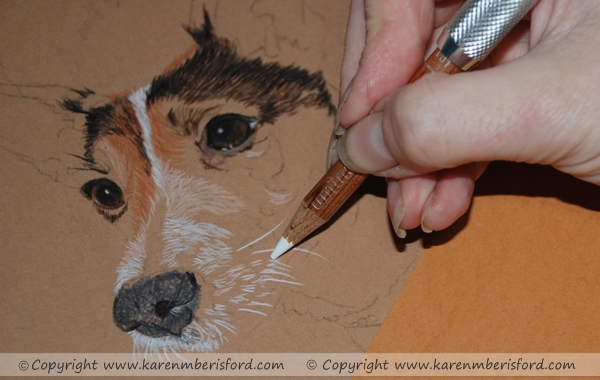 Jack Russell portrait in coloured pencil progress 1