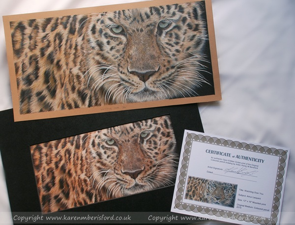 Amur Leopard in Coloured pencils alongside a Giclee print and the Certificate of Authenticity