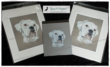 Original Artwork and 2 large prints of a female White Boxer Dog created in Coloured pencils by the UK Artist Karen M Berisford