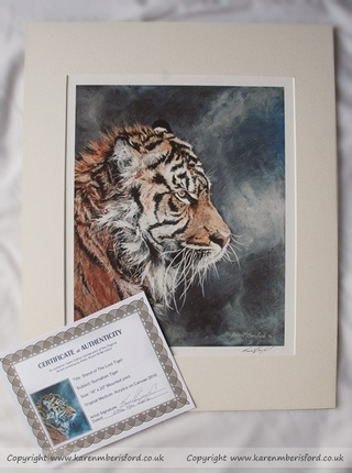 Sumatran Tiger print and certificate of authenticity