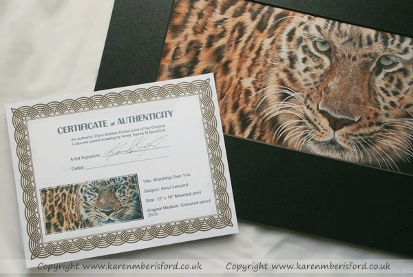 Giclee print of an Amur Leopard pencil drawing