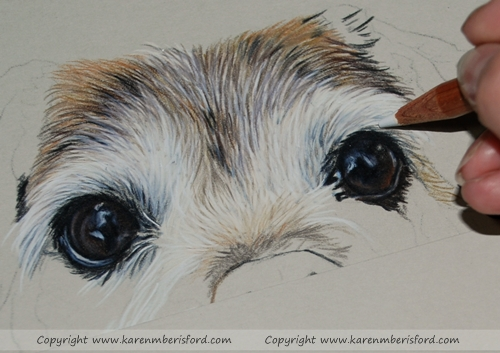 Drawing in the eyes on a jack russell pug coloured pencil portrait