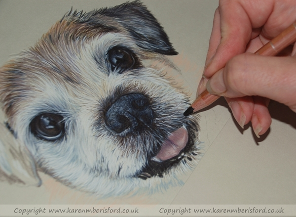 Drawing the fine hairs on a coloured pencil pet portrait