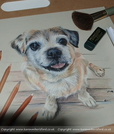 Progress so far of a coloured pencil jack russell pug pencil portrait with caran dache luminance pencils