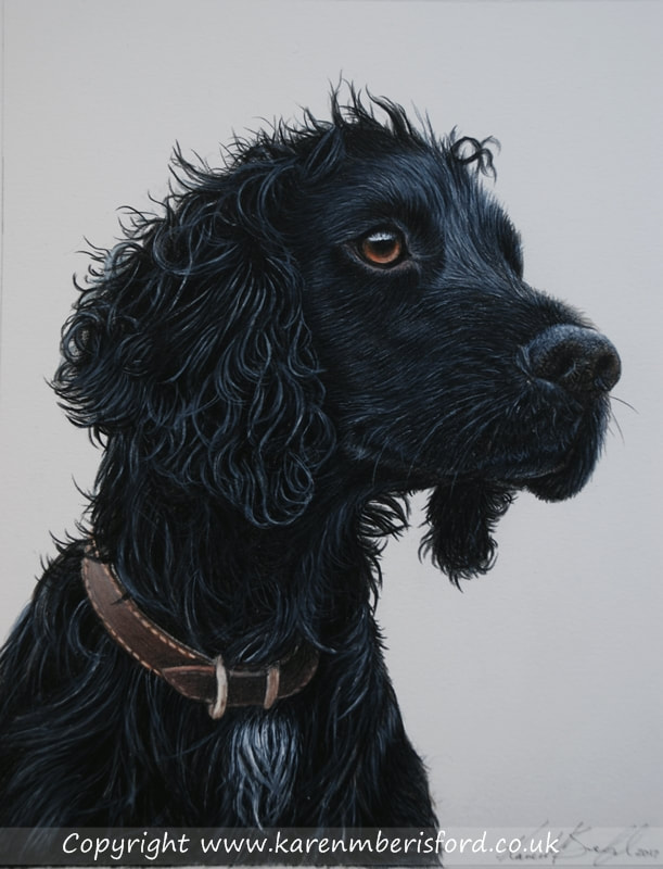 Black cocker spaniel Coloured pencil drawing