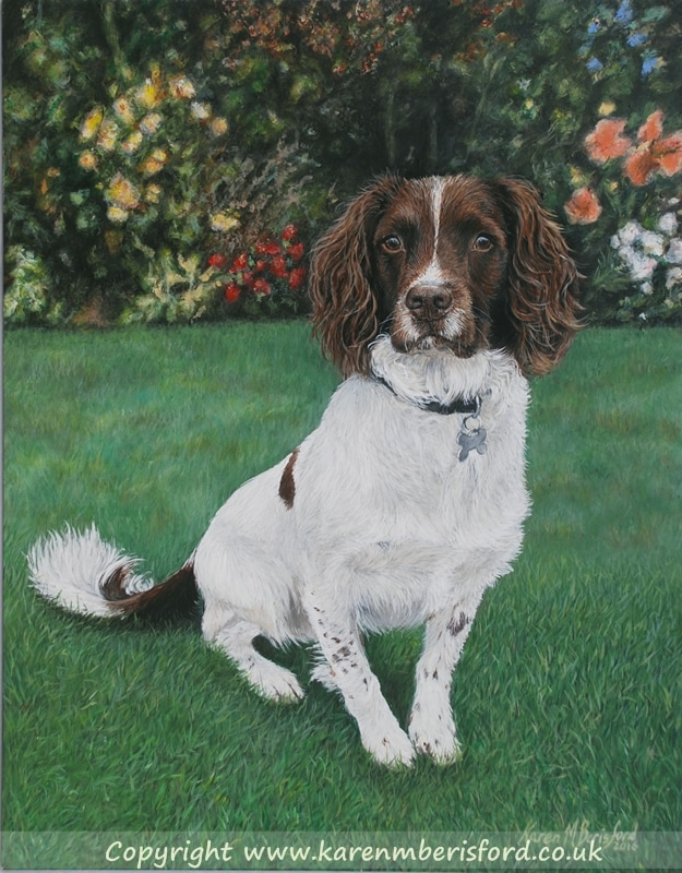 Acrylic painting of a Springer Spaniel sat on grass with beautiful border flowers in the background