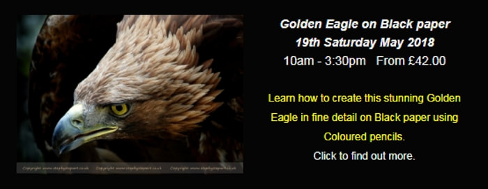 Golden Eagle photo for a coloured pencil workshop in chesterfield, derbyshire, uk