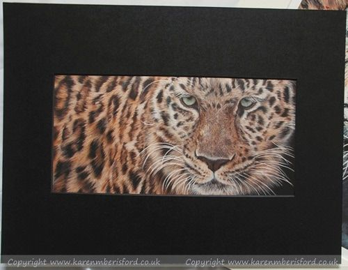 Giclee print of an Amur Leopard created in Coloured pencils and mounted in a black mount