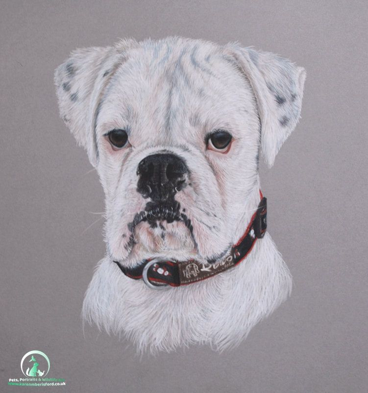 West Highland Terrier pet portrait completed in Coloured pencils