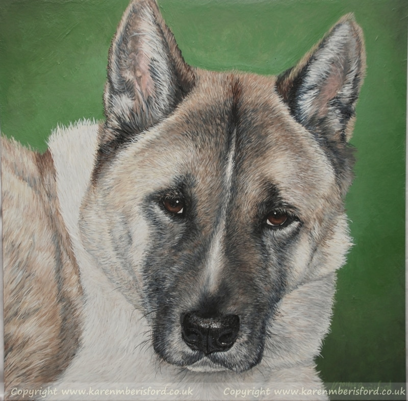 Japanese Akita acrylic painting highly detailed with green background