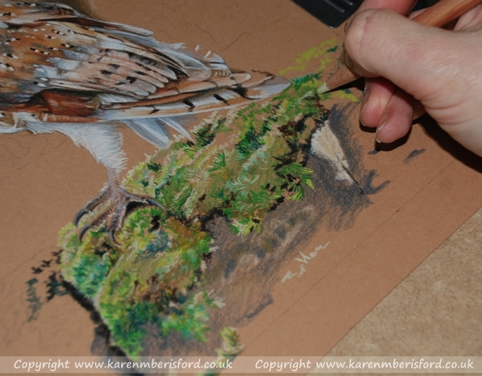 Drawing moss on a wall within a Barn Owl portrait created with Coloured pencils