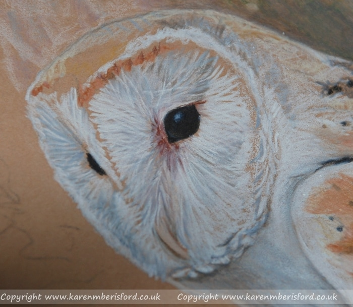 Coloured pencil Barn Owl head portrait in progress