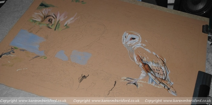 Early progress of a Coloured pencil portrait of Barn Owls on a wall