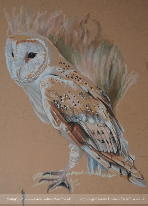 Progress of a Coloured pencil Barn Owl on tan Ursus paper