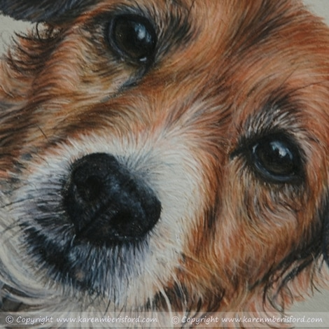 Close up of a Female Jack Russell pet portrait completed in Coloured pencils
