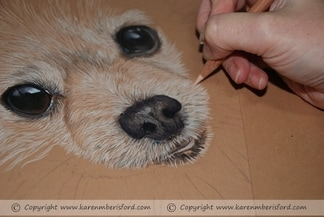 Cream Pomeranian pencil portrait progress 2