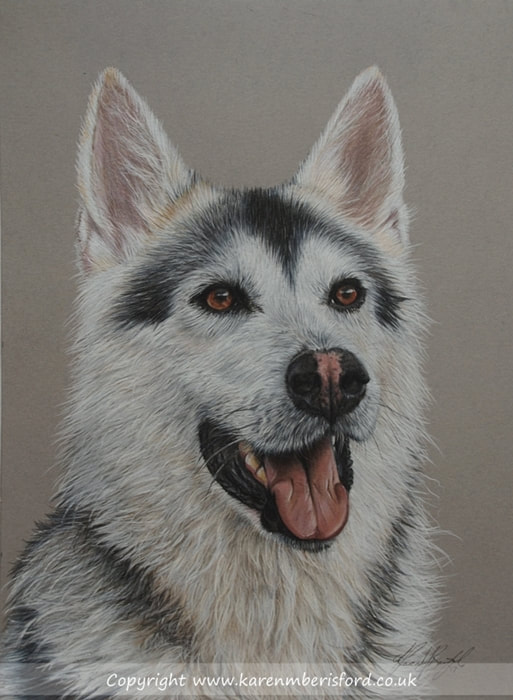 Northern Inuit dog Coloured pencil drawing