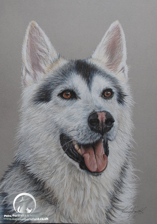 Northern Inuit Coloured pencil portrait