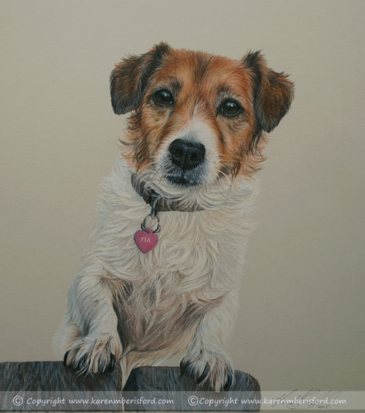 Jack russell dog Coloured pencil drawing